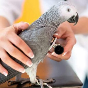 Bird Health
