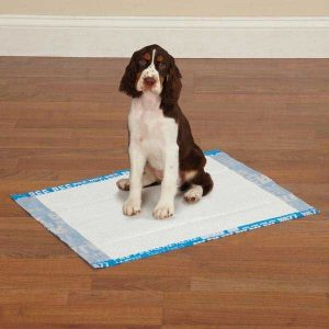 Dog Pee Pads & Diapers