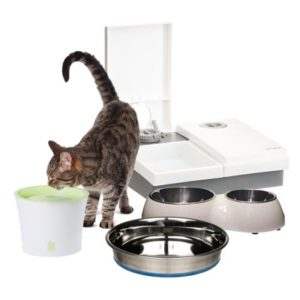 Cat Accessories