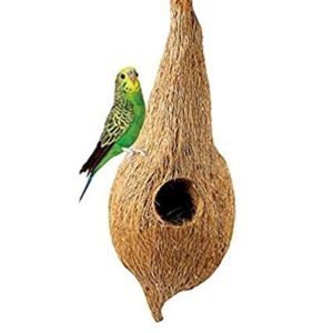 Birds Accessories