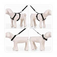 Dog Collars & Harness